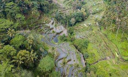 Reisterrassen auf Bali – Tegallalang und Jatiluwih