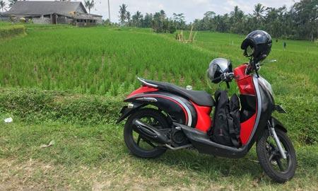 Roller fahren auf Bali – Wie gefährlich ist es wirklich?