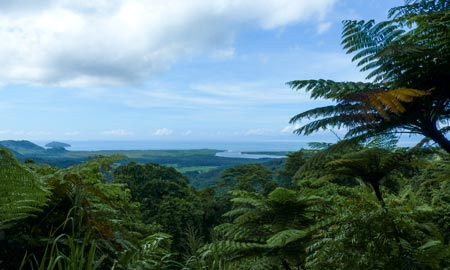 Tagestour zum Daintree Rainforest & Cape Tribulation