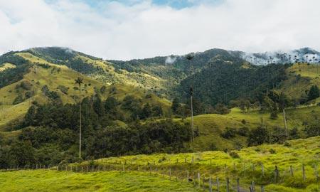 Valle de Cocora – Wanderung durch das Wachspalmental